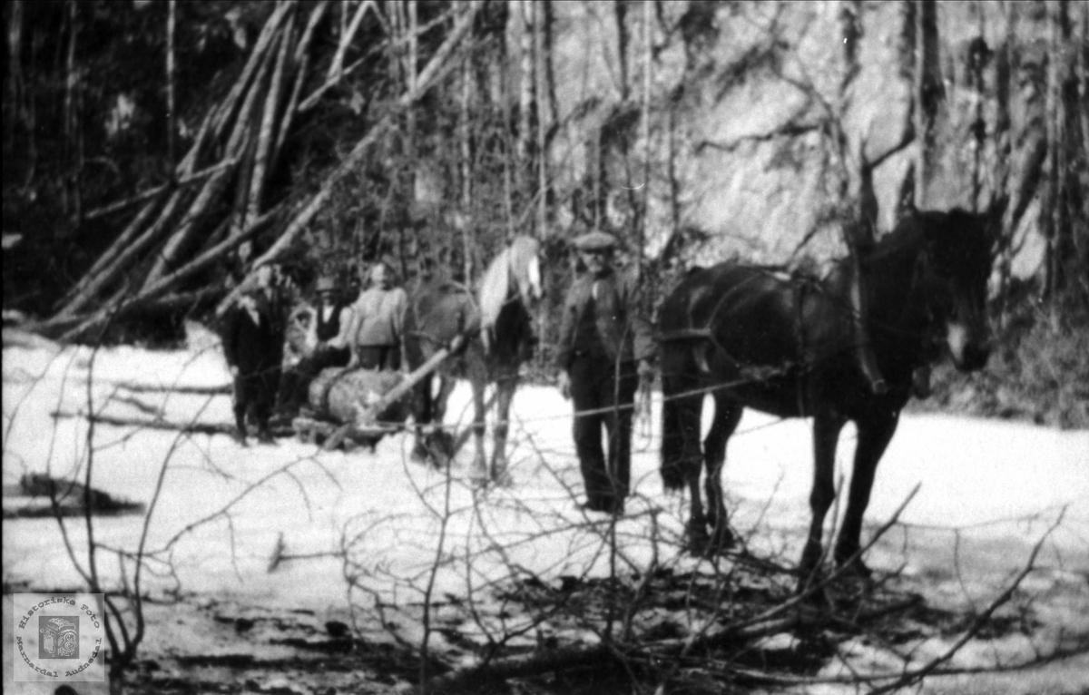 Tømmerkjøring i Høyeskogen, Øyslebø