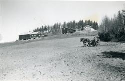 Såing av åker i Stølsdokken. Arne Rust med hest og såmaskin
