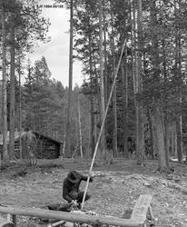 Skjefting av fløterhake ved Stenbekkoia, som ligger ved Femu