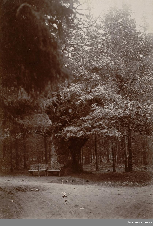 park med benk og bord.  Bilde fra Marie Knudtzon (1879-1966) sin fotosamling. Se bilde nr KMb-2010-011.0001 for mer biografi. Fra Nordmøre museum sin fotosamling.