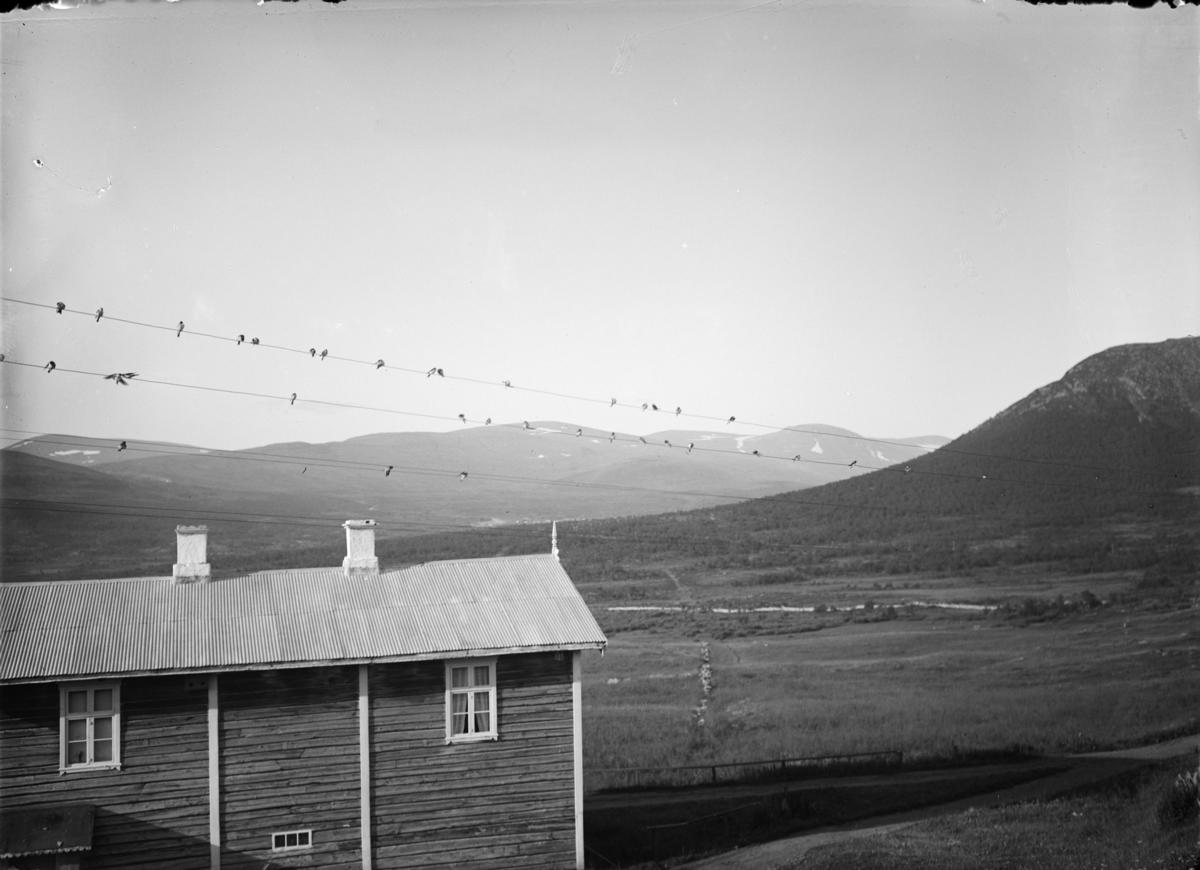 Hjerkinn fjellstue på Dovrefjell. Svaler på telefonledningen.