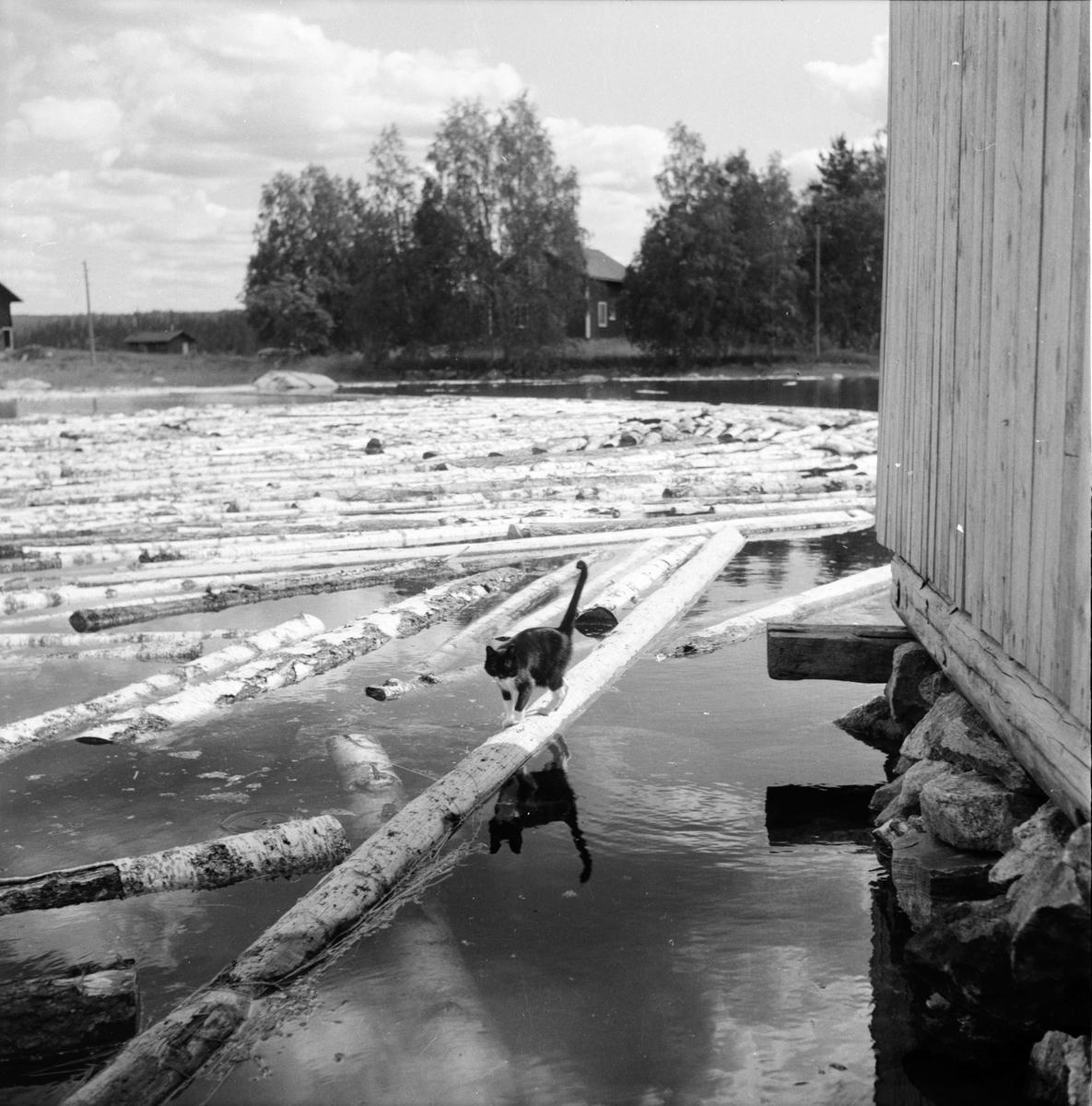 Mållångstad, Gullberg, Konsum, 20 Juli 1960
