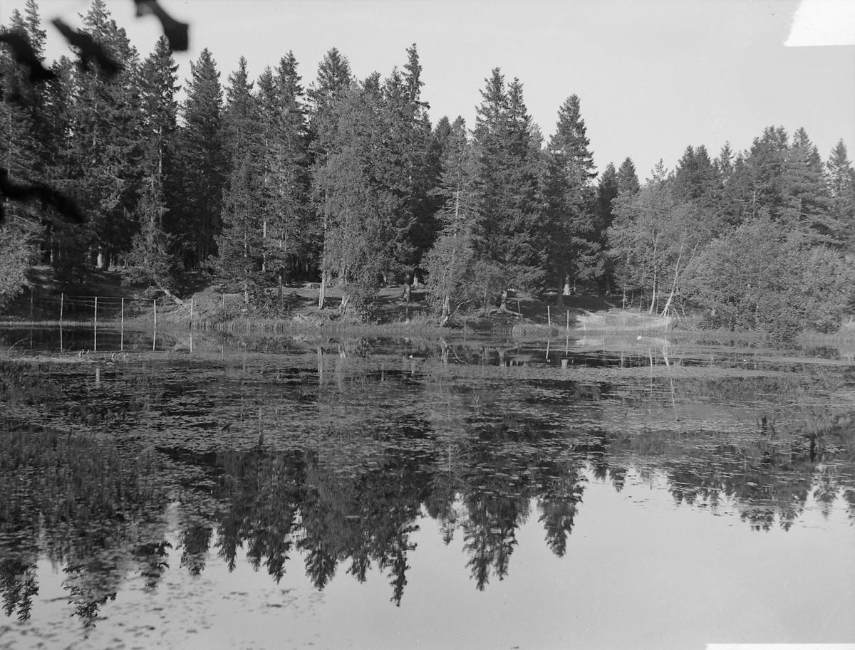 Brønn og dam ved Reitgjerdet og på Charlottenlund