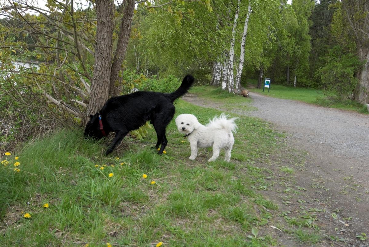 Hunden Chico på tur treffer en annen hund.