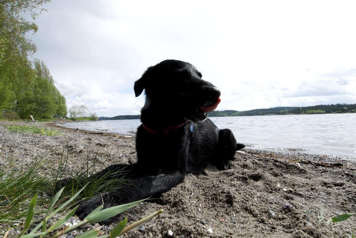 Hunden Chico på tur har lagt seg på bredden ved et vann.