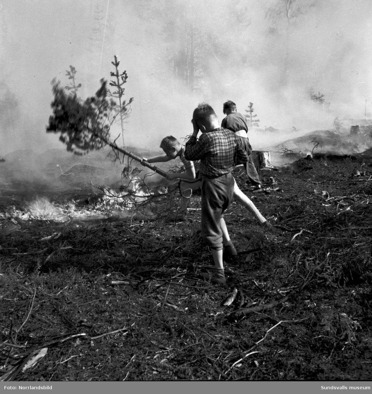 Hyggesbränning. Människor med risruskor jobbar med att begränsa elden. En brandman dricker ur vattenslangen.  Okänd ort.