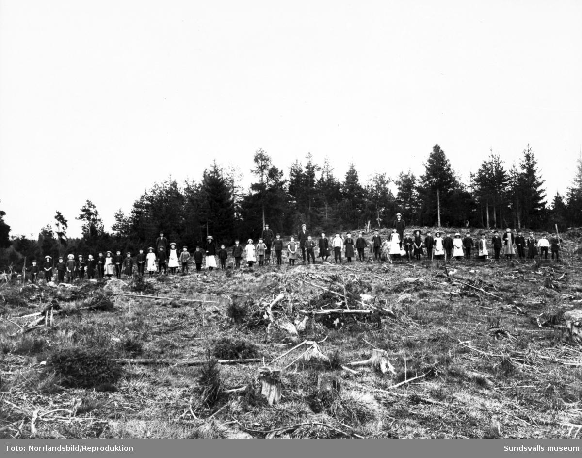 Skogsplantering, troligen tidigt 1900-tal. Större delen av arbetslaget består av barn och kvinnor. Bilden är en reproduktion, tid och plats okänt.