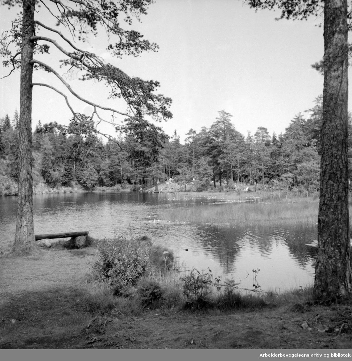 Nordmarka: Båntjern. Juli 1956