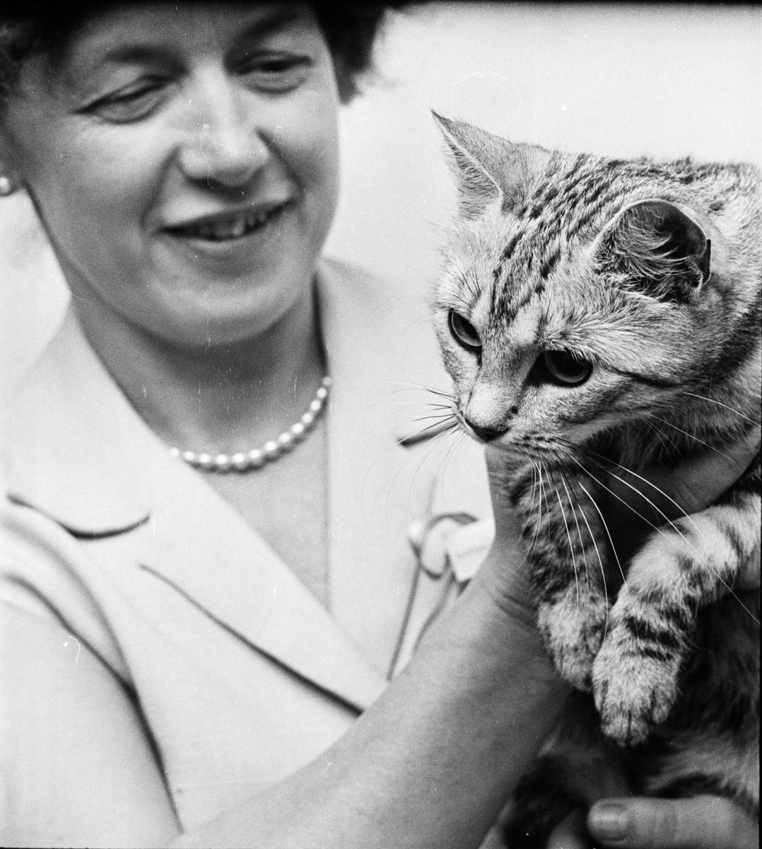 "Katter - ""miss Uppsala"", Uppsala 1966"