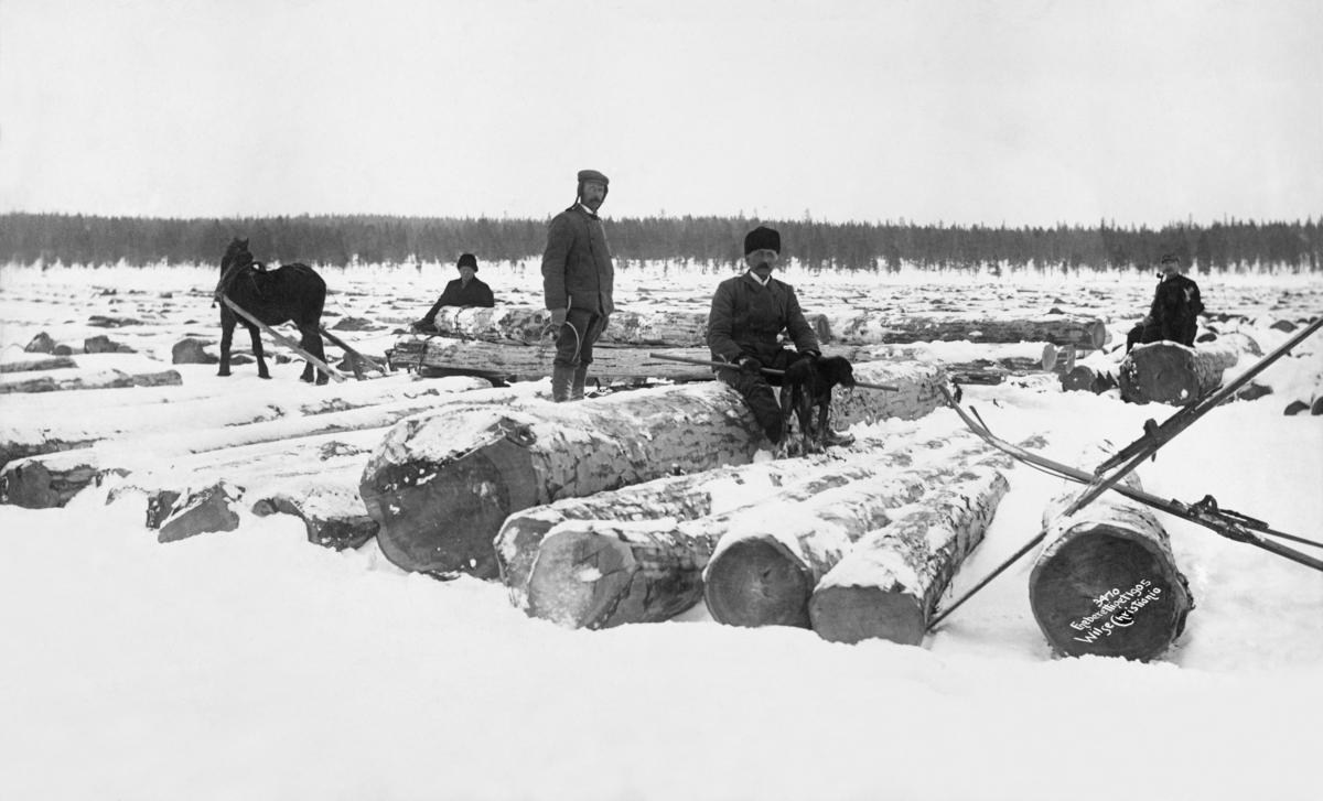 Tømmermåling på Femundsjøen i 1905.  Fotografiet viser floer med baket furutømmer av vekslende, men gjennomgående store dimensjoner, som ligger på den snødekte isflata.  På den største av stokkene sitter en mann med en hund.  Dette er antakelig skogdirektør Michael Saxlund.  Bak ham står en tømmermåler med en klave i handa.  I forgrunnen til høyre er det reist ski mot en stokk.  Helt til høyre sitter også en mann på en tømmerstokk.  Mellom den nærmeste tømmerfloa og de bakenforliggende er det en passasje hvor det står en mørk hest forspent en rustning med barket tømmer.  Tømmerkjøreren sitter foran på lasset. Femunden.   Fotografiet er tatt i forbindelse med de store Femundsdriftene i åra 1904-1905, da den statlige skogetaten solgte hogstrettigheter til store mengder gammelskog i Femundstraktene.  I 1904 ble det blinket 11 102 tylfter (133 224 trær) i den grove gammelskogen i den nordre delen av daværende Rendalen statsallmenning.  Den blinkete skogen ble solgt på rot til norske kjøpere, i hovedsak til selskapet Kiær & Mathiesen Ltd., en allianse mellom to trelastaktører som ble etablert med sikte på dette prosjektet.  Mesteparten av tømmeret som ble avvirket her vinteren 1904-1905 ble kjørt til innsjøen Femund for videre fløting derfra. Bare et lite parti ble transportert til innsjøen Galten for fløting på Klara med videre overføring til Grøna og Mistra.  På de nevnte sjøene ble tømmeret målt og merket før isløsninga og fløtingssesongen.  På grunn av den lange avstanden til markedene, med besværlige fløtingsvassdrag som transportårer, var det bare rotstokkene som tatt hand om, mens toppstokkene ble liggende i skogen og råtne.  Sjøl om det altså bare var det mest verdifulle tømmeret det ble kostet fløting på, gikk mange av uthogstprosjektene med underskudd.  Minnene til en av dem som deltok i hogstene er gjengitt under fanen «Opplysninger».