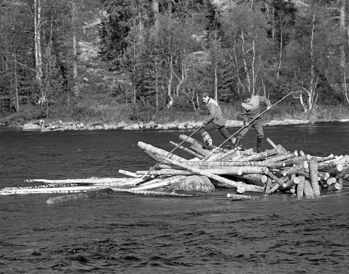 «Haugkarene» Arne Rud og Martin Myhr løsner tømmervase i Femundselva ved Myrstadvelta i Engerdal våren 1986.  Tømmerhaugen ser ut til å ha bygd seg opp bak et steinskjær ute i elveløpet.  Stokkene lå hulter til bulter, på rekke, ovenfor det nevnte steinskjæret.  På den fremre delen av haugen sto de to karene med hver sin fløterhake, som de brukte til å dra eller skyve stokkene ut i det frie, langsomtflytende elvevatnet.  For å få løsnet dette tømmeret trenge fløterne assistanse fra arbeidskamerater som satte dem over på haugen via båt (jfr. SJF.1994-00044 - SJF.1994-00048 og SJF.1994-00069, SJF.1994-00073).  I 1986 ble det fløtet cirka 90 000 kubikkmeter tømmer fra Engerdal og Trysil i Norge over til Sverige og industrien i Karlstad-regionen.  23 menn deltok i fløtingsarbeidet, noe som innebar en betydelig reduksjon etter at fløtinga i sidevassdragene var avviklet.  Tømmeret ble i stedet kjørt med lastebiler til velteplasser, som den dette fotografiet er tatt fra.  Her ble det barket på ambulerende maskiner og - når vannføringa var høvelig - utislått ved hjelp av hjullastere.