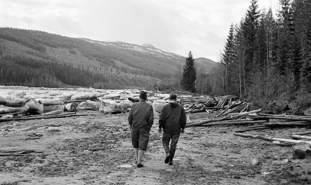 Isgang ved Sundfloen i Stor-Elvdal i begynnelsen av mai 1963.  Fotografiet er tatt ved elvebredden, der to menn, antakelig fløtingsfunksjonærer, vandret mot en del tømmer som ismassene hadde presset, hulter til bulter, mot land.  I sjølve elvefaret lå det fortsatt store mengder is.  I bakgrunnen ser vi ei li med barskog, og tydelige spor etter etterkrigstidas dominerende avvirkningsregime: snauhogster.  Isgang har mang en gang skapt problemer i Østerdalen, særlig når lange og kalde vintrer brått har blitt avløst av varm vårsol, som har fått isen til å brekke opp og drive nedover Glomma i store masser.  I 1904 skrev kanaldirektør Gunnar Sætren følgende: «Undertiden, men heldigvis ikke ofte, forekommer isgang i Glommen, og denne forvolder da store ulemper.  Isbruddet begynder i almindelighed nedenfor Barkalden, undertiden også længere oppe, og stanser sjelden før i Stor-Elvedalen.  Dersom den gaar saa langt som ned til kirken og stanser der, bliver alle øer og hele dalbunden lige op til Sundfloen belagt med is og tømmer.»  Når så ismassene, gjerne ispedd fløtingstømmer, så satte seg fast i trange eller grunne passasjer, kunne det altså bygge seg opp digre vann- og ismasser i områdene ovenfor.  Dette skjedde også i månedsskiftet april-mai i 1963.  Situasjonen ble mer og mer truende.  Den 5. mai oppsto det imidlertid en åpning i isfronten ved Tannfetten, og dermed drev både is og fløtingstømmer langsomt nedover elveløpet.  Noe av isen satte seg riktignok fast på nytt, ved Tremoholmen, men den løsnet snart igjen.  Dermed kunne storelvdølene pustet lettet ut, for Glomma hadde fritt avløp.  Sjøl om det lå igjen en del is og tømmer ved Sundfloen var det lite sannsynlig at situasjonen ble verre igjen, slik at det kunne oppstå nye skader.  Når elva var fylt av is og fløtingstømmer på denne måten, var det naturligvis ikke tilrådelig å krysse den.  I perioder med isgang var det følgelig svært vanskelig for storelvdøler som bodde på vestsida av Glomma å ta seg til kommunesentere