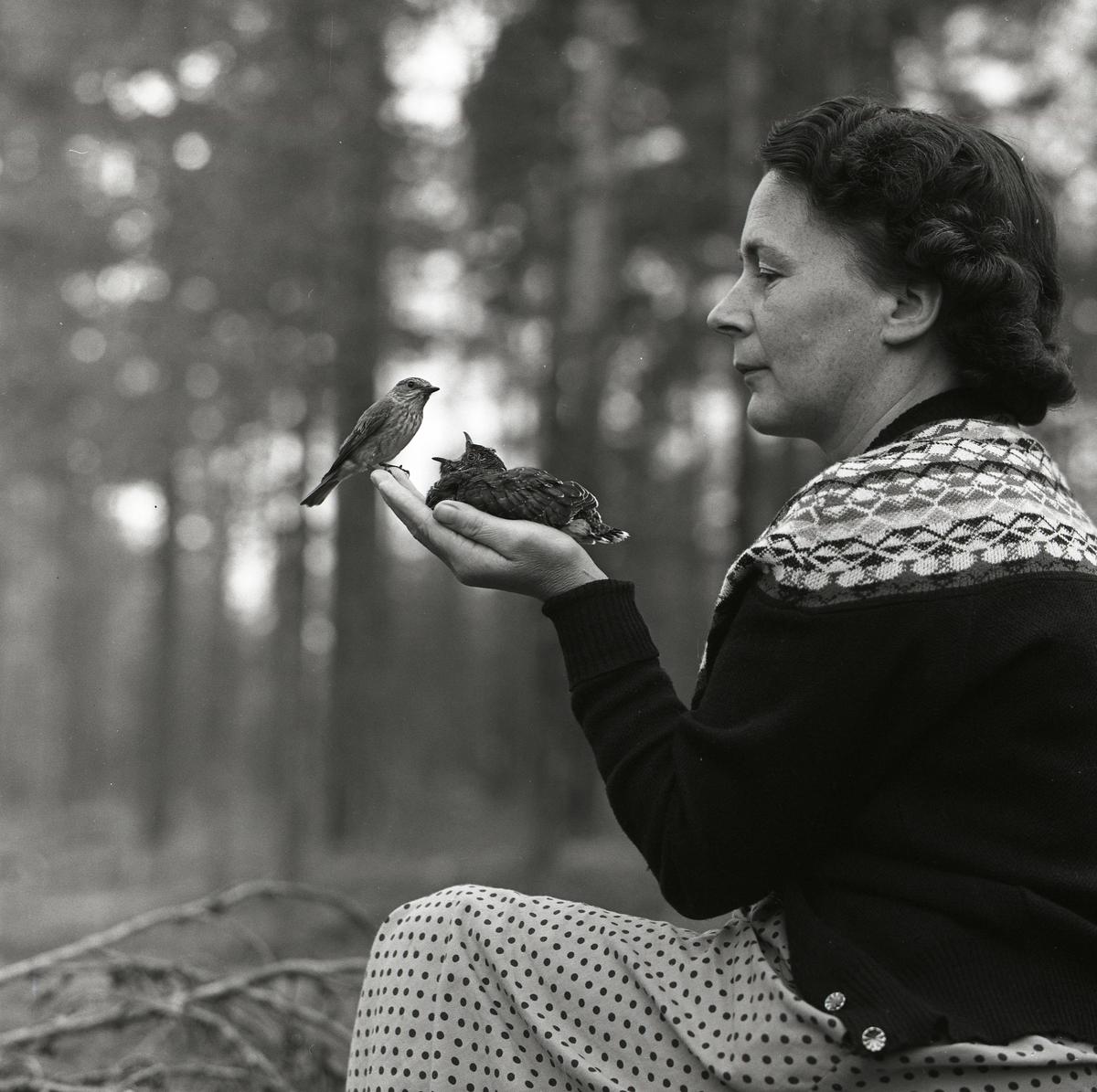 I en kvinnas hand sitter en gökunge och blir matad av en fågelhona den 13 juli 1961.