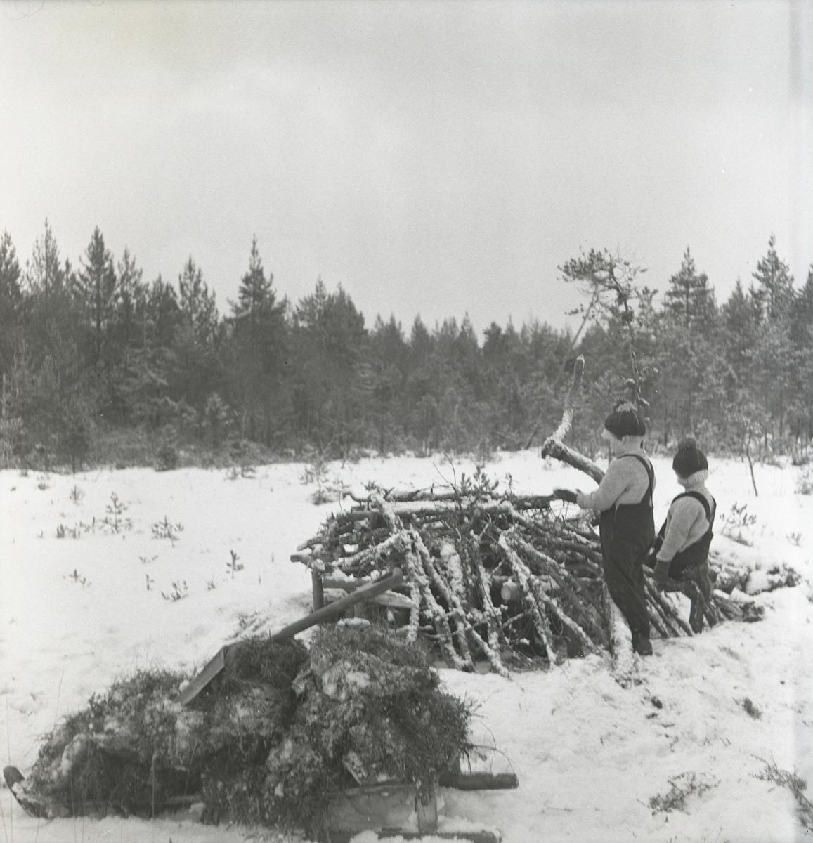 Två pojkar vid orrkoja på Västanmyren den 13 december 1950.