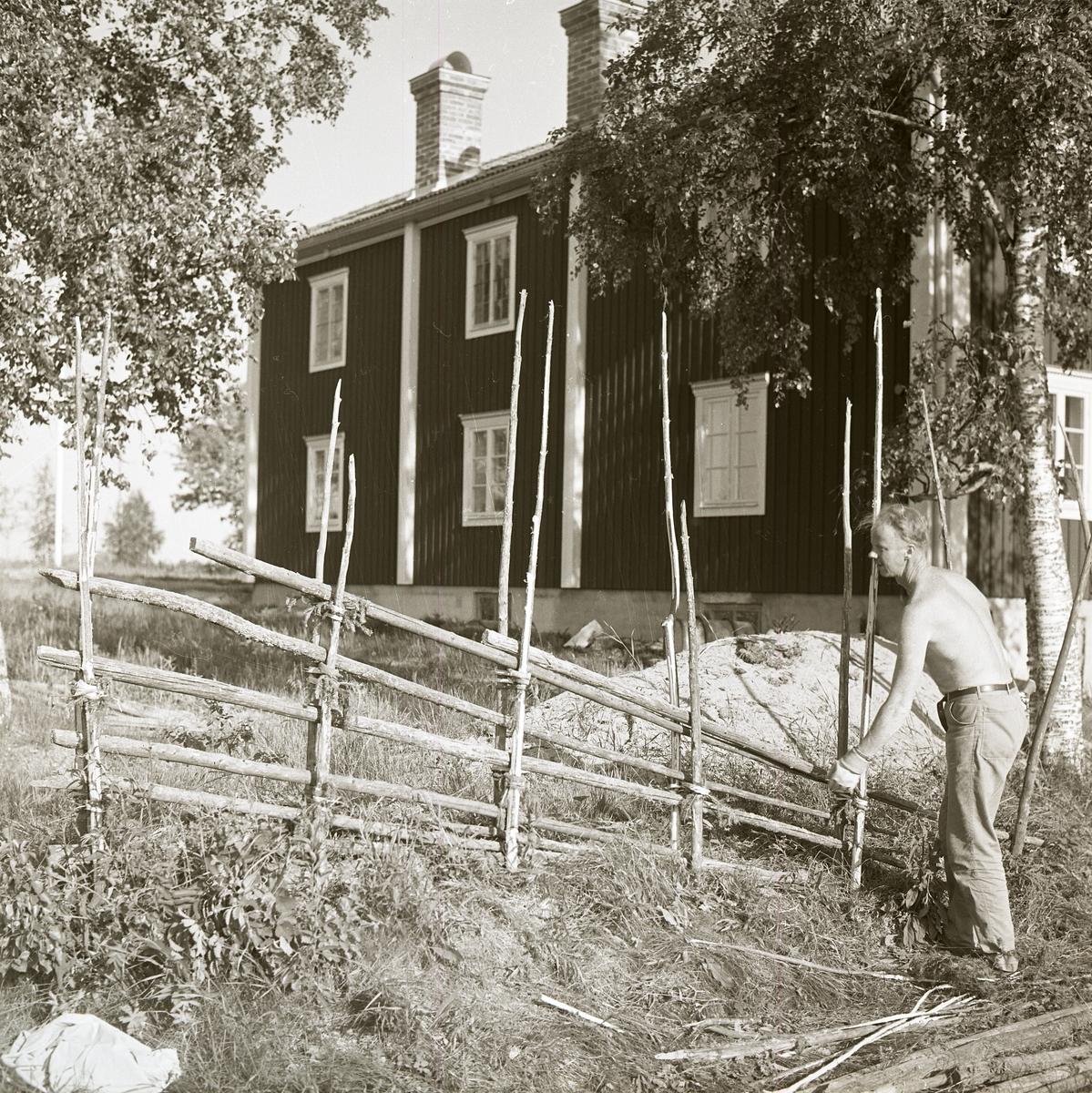 En man bygger gärdesgård runt hagen på gården Sunnanåker, sommaren 1969.