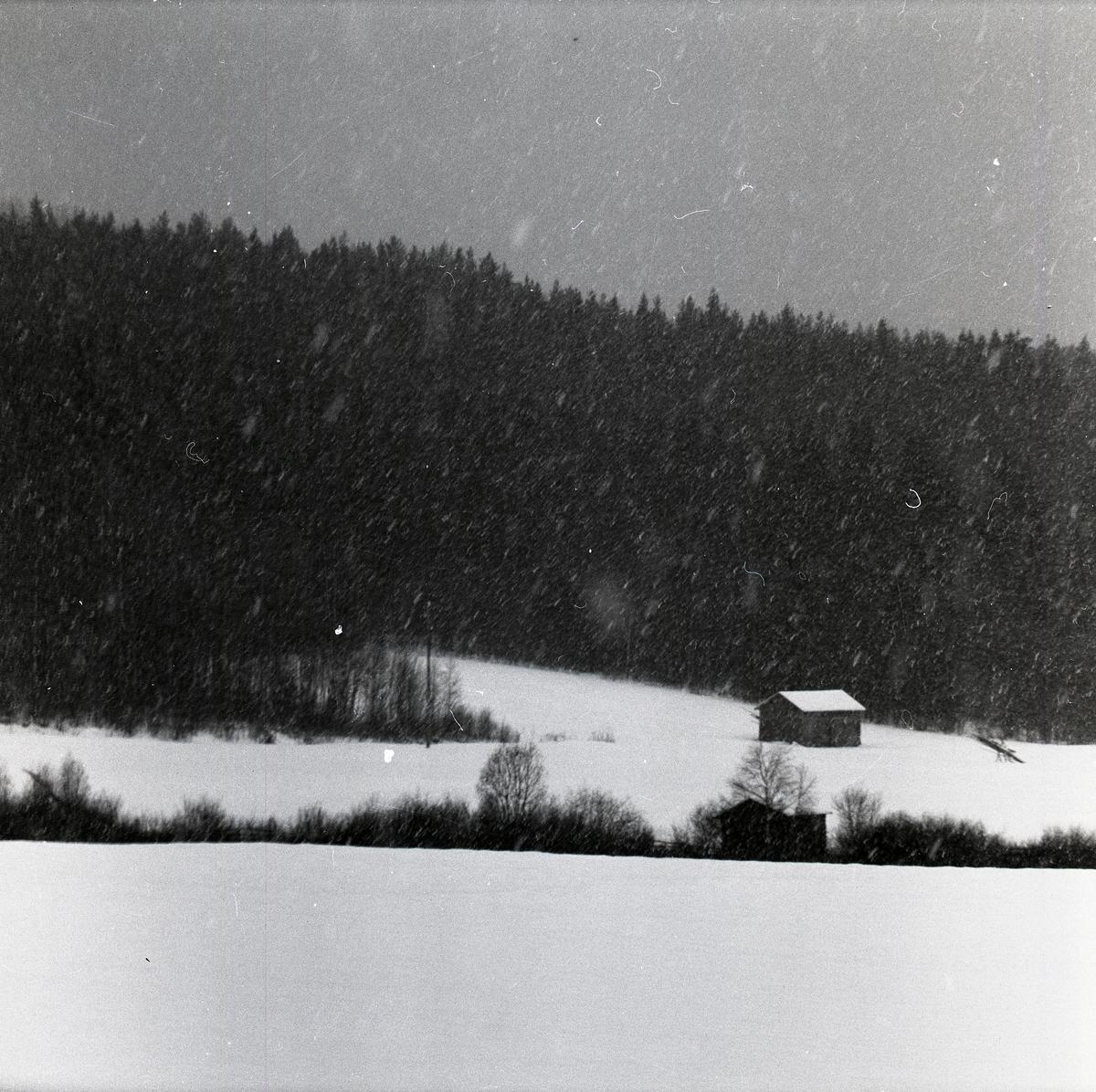 Snöoväder bortåt Västerängen vid Skogberget i Rengsjö 6 december 1959.