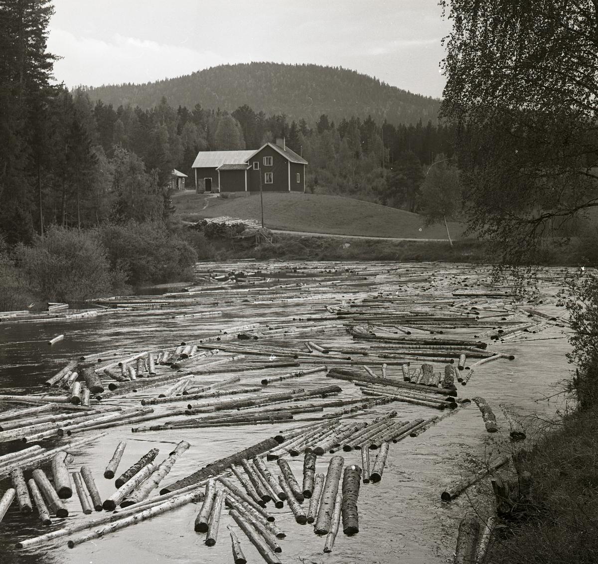 Timmer flyter i ån Svågan framför ett hus på en kulle, 1965.