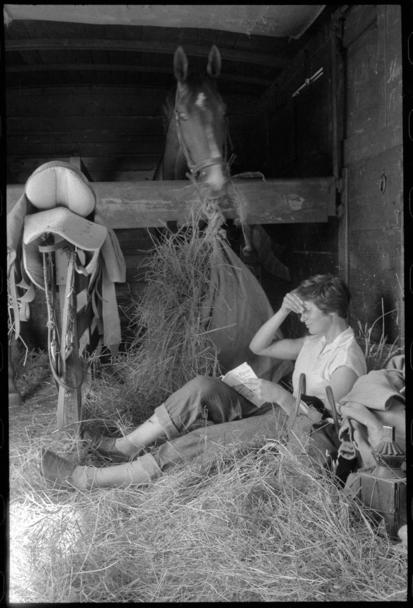 Djurtransport. Värdefulla hästar transporterades ofta i specialinredda vagnar tillsammans med deras vårdare.
