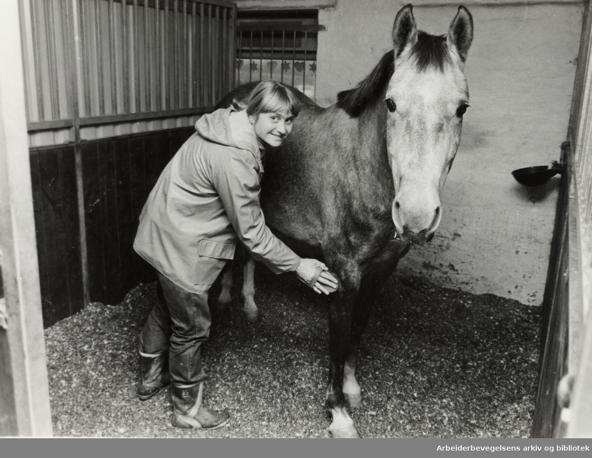 Ellingsrudåsen Ridesenter. Cecilie Kilde pusser og strigler hestene. November 1982