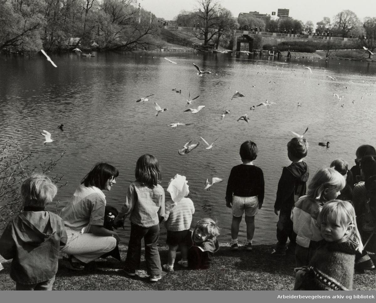 Frognerparken. Mai 1981