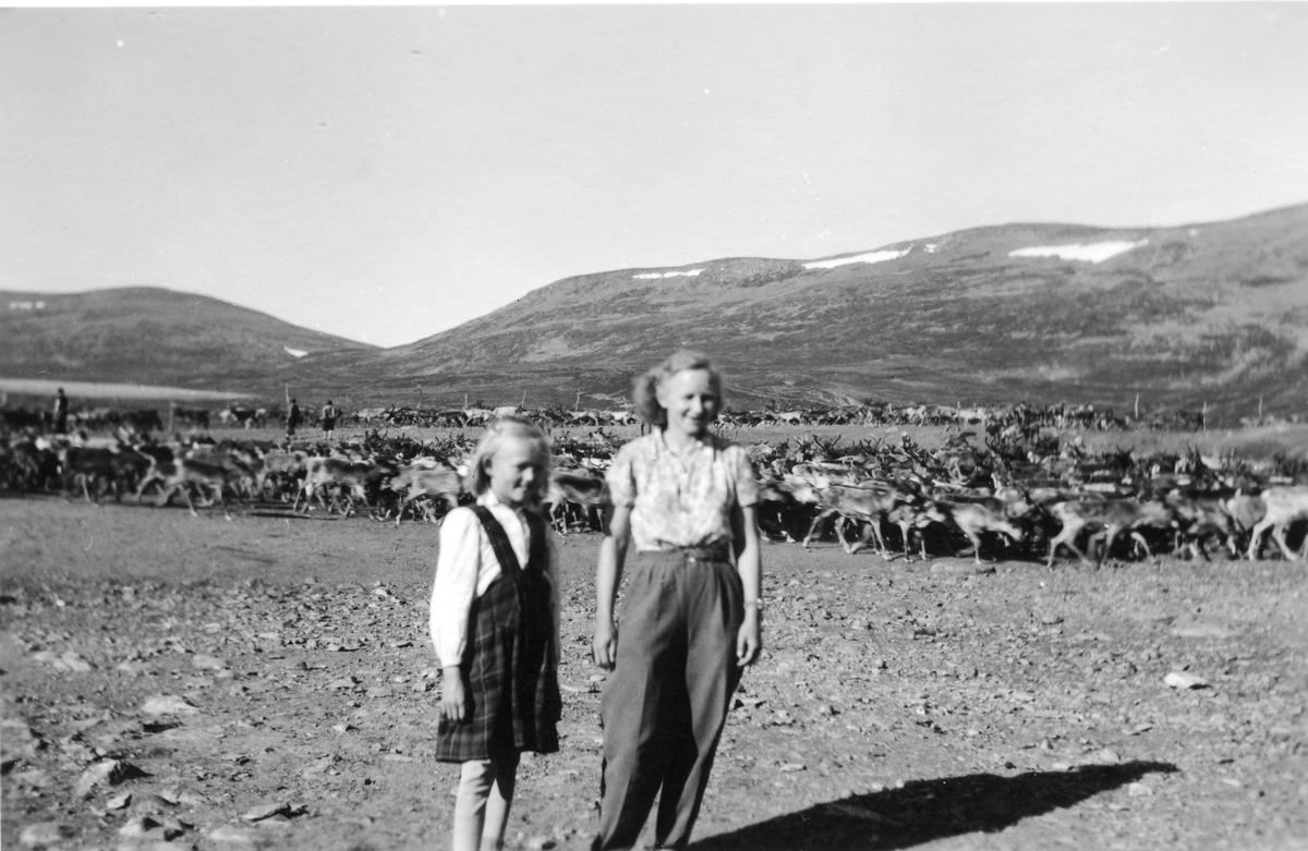To unge damer foran reinflokk i reingjerde