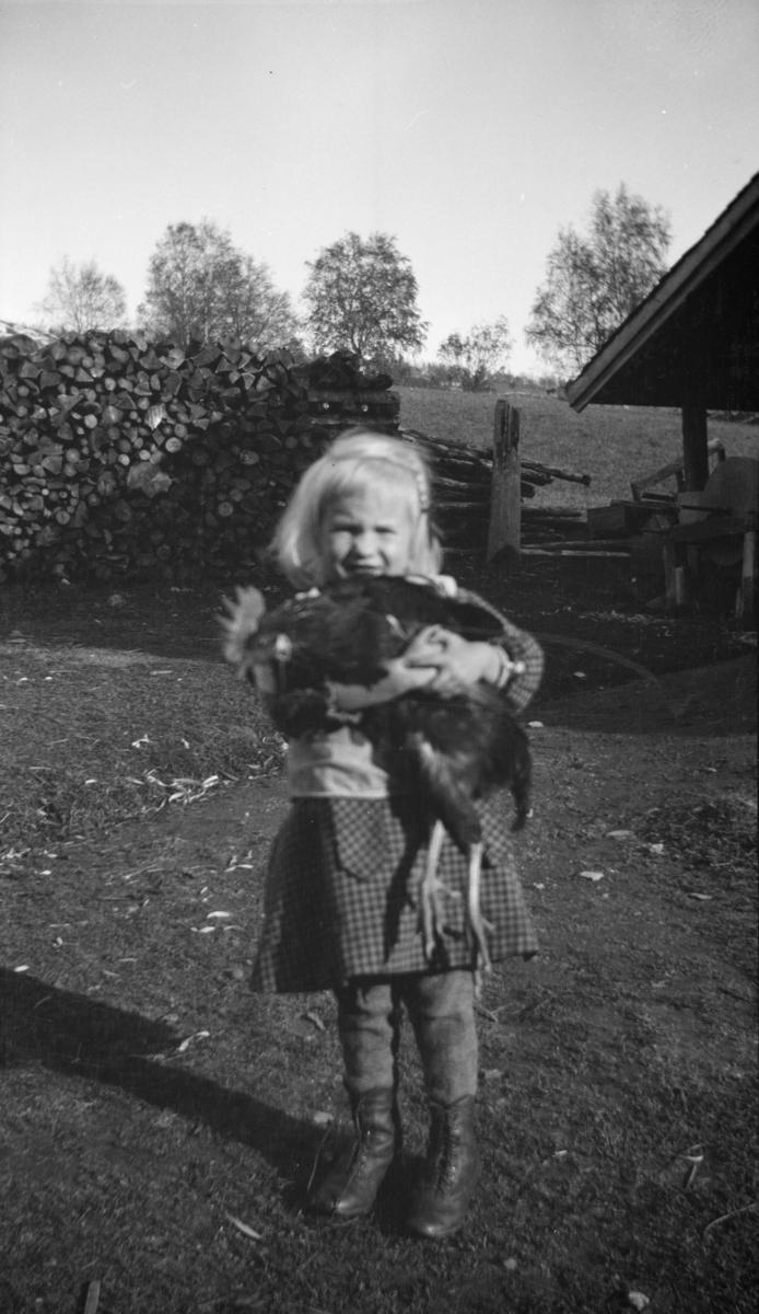 Liten jente med en stor hane, antakelig på Linjordet i Østre Gausdal