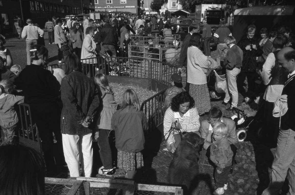"""Höstmarknaden """"Bonde på stan"""" lockar många besökare till Järntorget. Bland bilar och torgstånd finns några små hagar. I hagen närmast kameran, anas en ponny. I nästa hage ses två ulliga får. En hund, till höger, får också uppmärksamhet."""