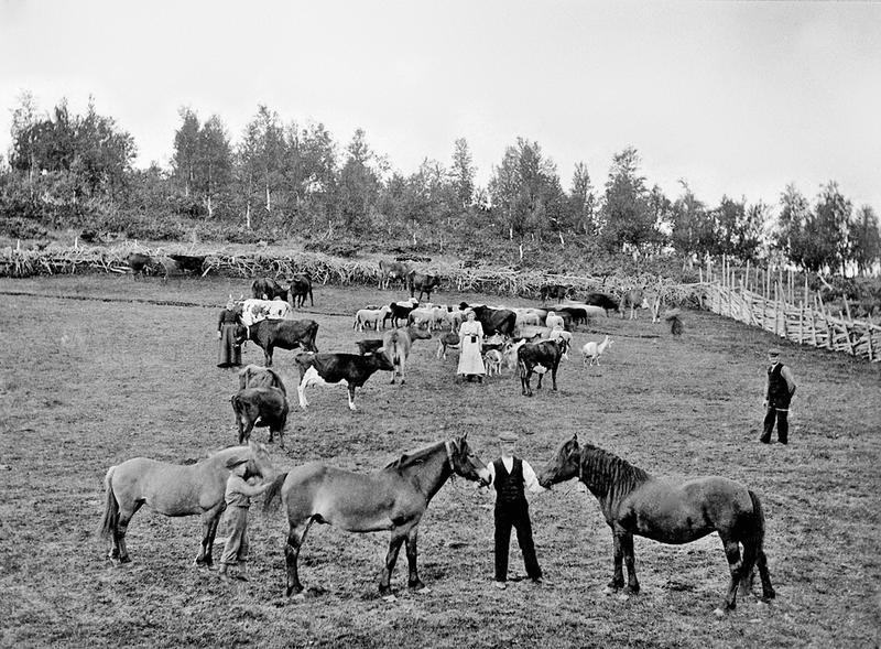 Eggengvollen, Langsetra, Vingelen. MINØ.114161. Foto: Engebret Lunaas/Anno Musea i Nord-Østerdalen