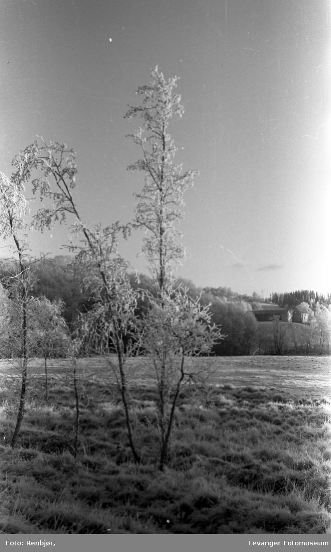 Vinterbilde rim og frost.