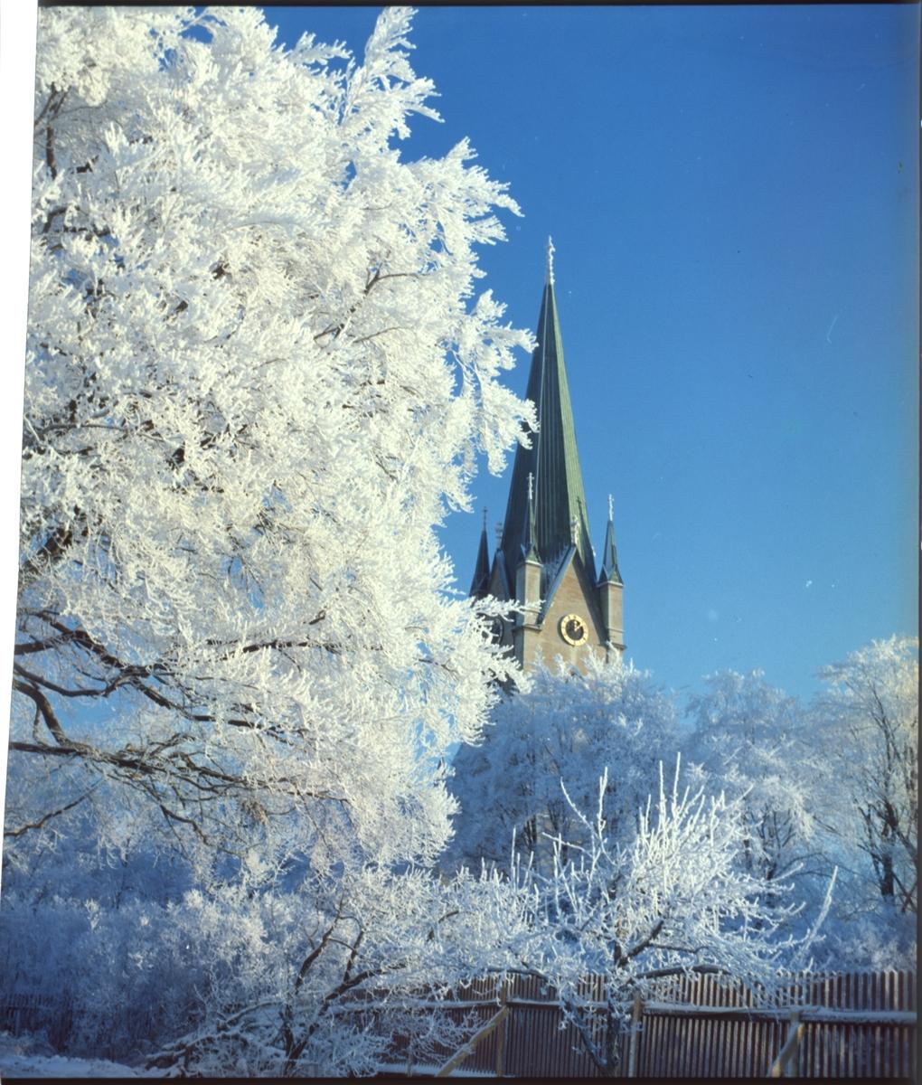 Domkyrkotornet och del av träd vintertid.