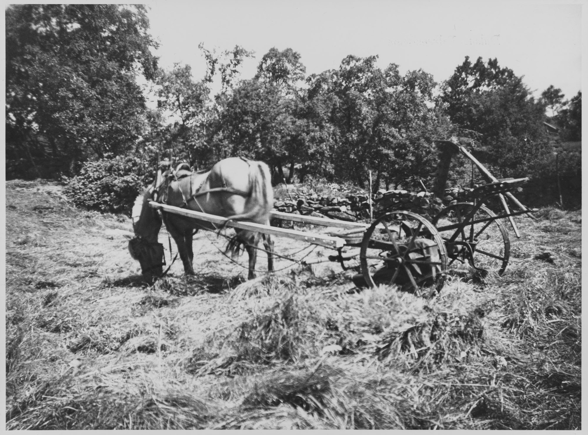 Hest med slåmaskin ved Grimåsen i Sokndal