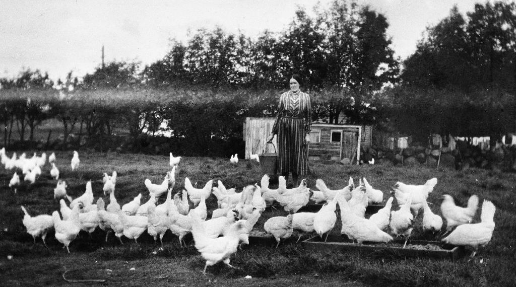 Kristine Line møter hønenepå Bryne gnr. 1 ca 1938.