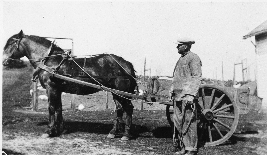 Albert Auglend med hest og vippekjerre på garden på Elisberget. Albert dreiv også attåtnæring som kjørar med langkjerre i Bryne i mange år. Han døydde i 1957.