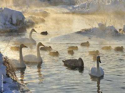 Vinterfugler_ystein_Sbye_nett.jpg