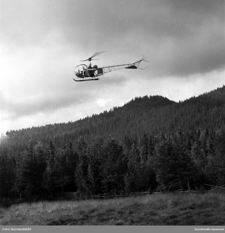 Skogsbesprutning med hormoslyr från helikopter.