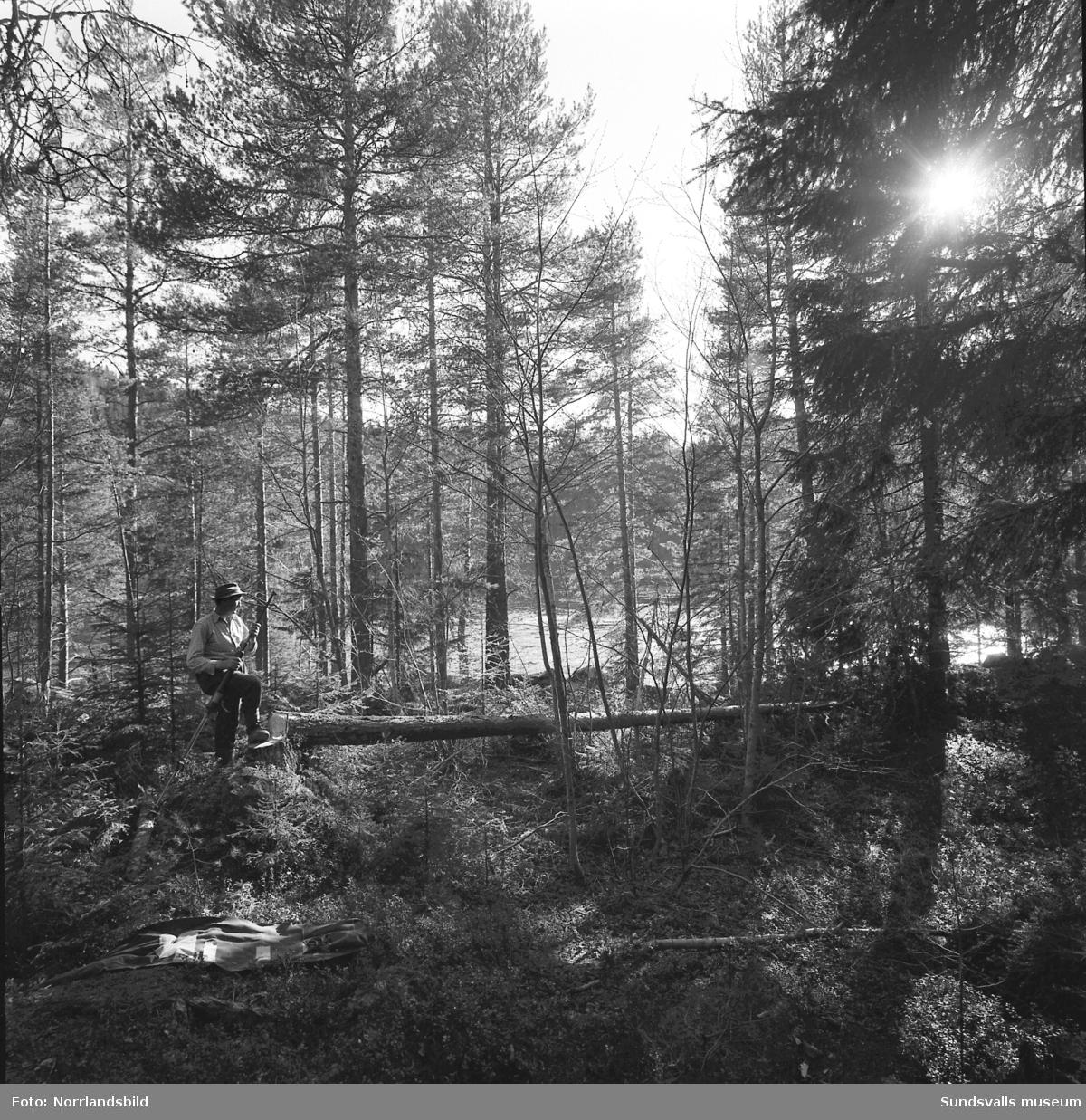 Ragnar Elfström, Viforsen, demonstrerar ett hjälpmedel vid trädfällning.