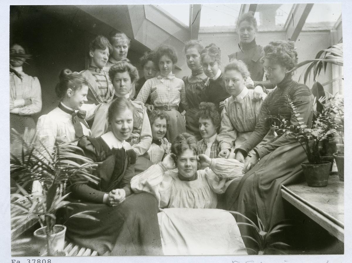 Stockholm.  En grupp kvinnor sitter och står bland krukväxter. 1901.