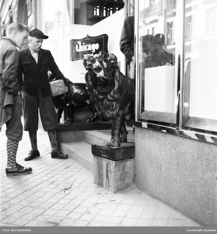 Två av bronslejonen som stod utanför entrén till Lindgrens järn på Storgatan 21.
