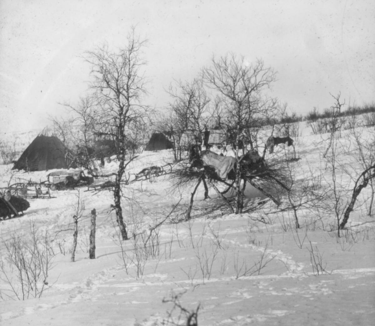 """""""N.327.) Forgrunnen samenes """"stabbur"""" står det på glassplaten. Samisk boplass. Bak trærne står flere samise telt, sleder er parkert rundt og foran teltene. Fremst i bildet er det bygget en oppbevaringsplass for mat, i god høyde over bakken, med et lager kvister tildekket med tekstil eller reinsdyrskinn.  Det er vinter og mange fotspor i snøen."""