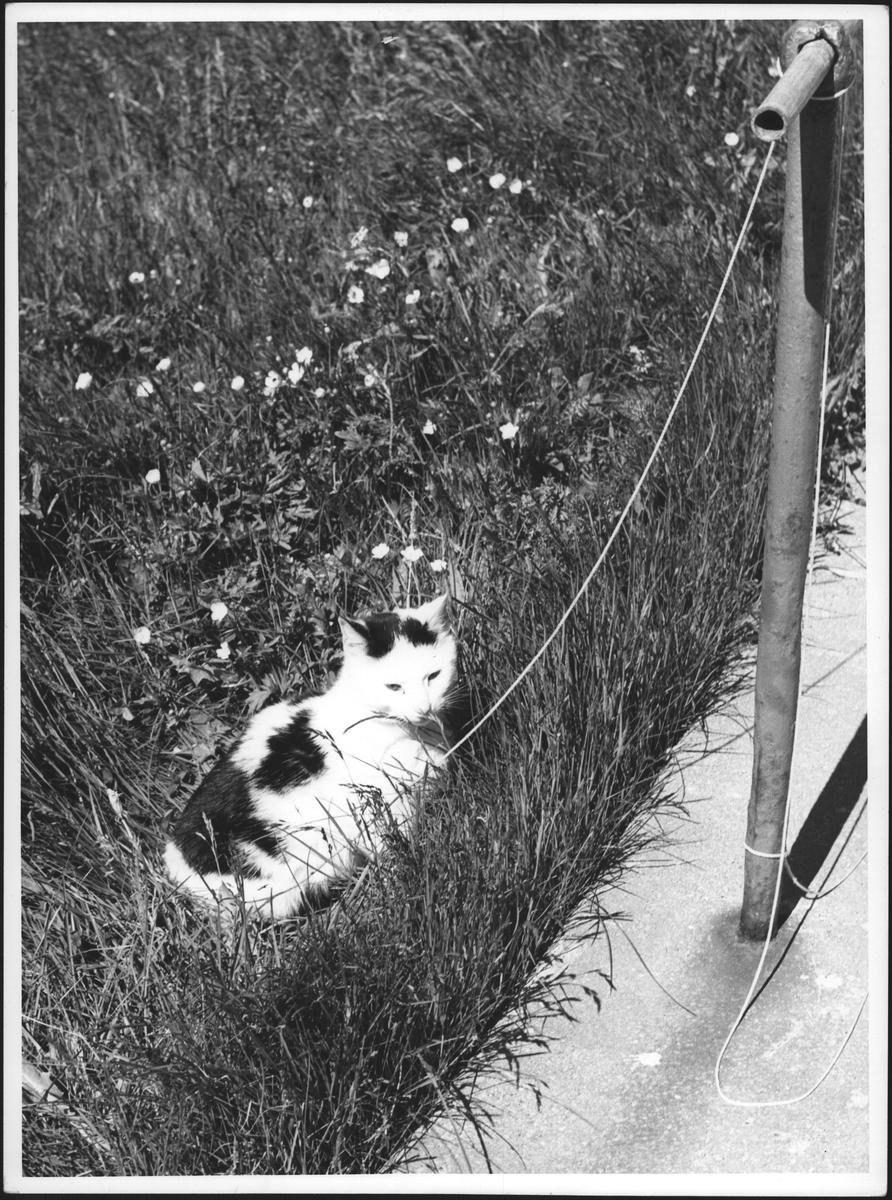 Katten på Skomvær fyr er tjoret