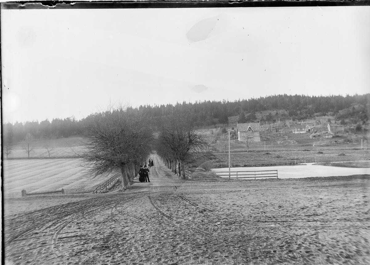 Utsikt utover alleen på Linderud Gård av trær. Seks personer står inne i alleen.