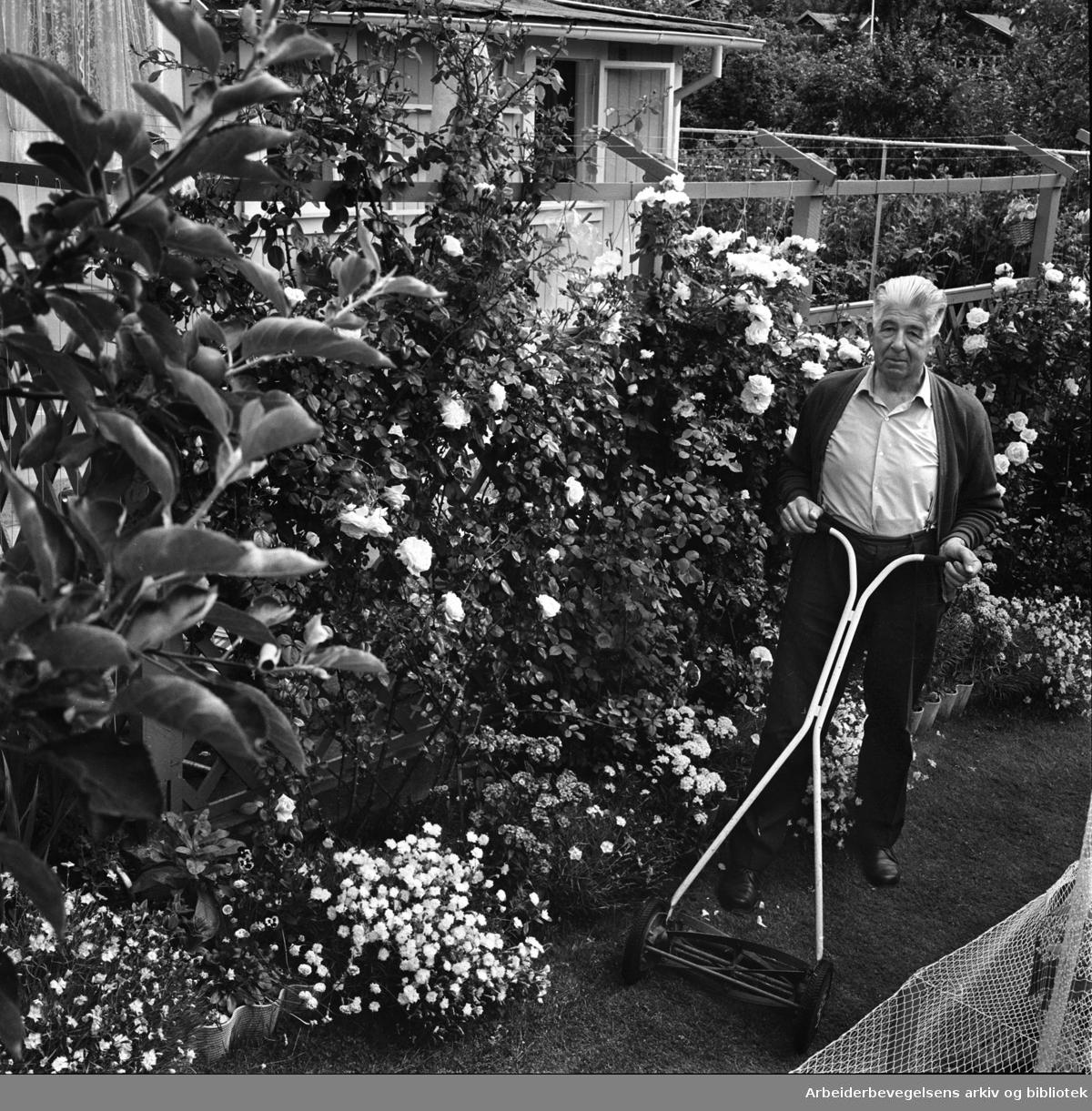 Rodeløkka kolonihage, .juli 1967