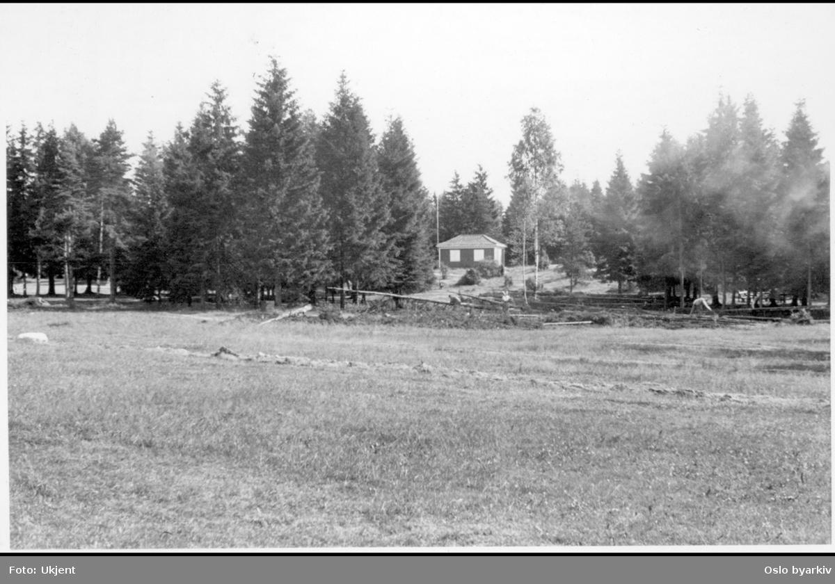 Skog og slette på Ekebergområdet / platået.Trefelling. (Hytte i bakgrunnen: Se bilde A-20145 / Uae / 0002 / 001).