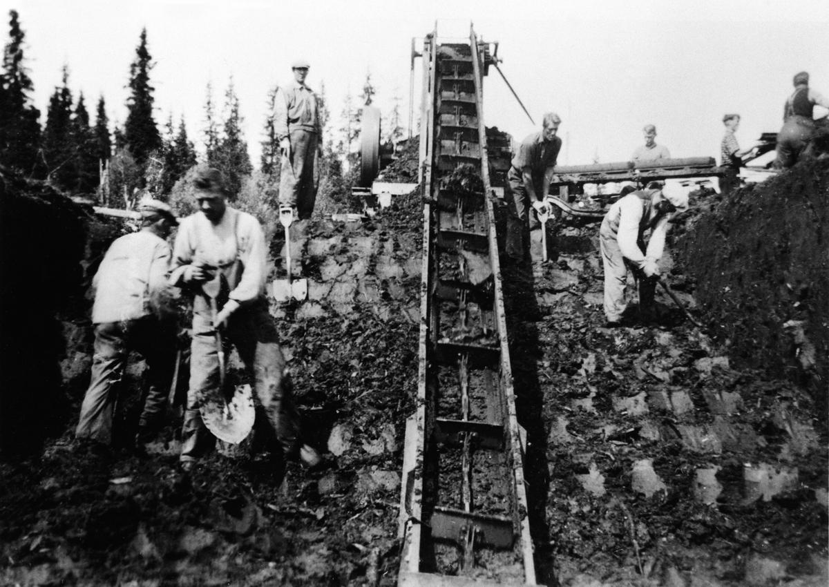 Torvstrøproduksjon på Kvemyra i Furnes Almenning, Ringsaker. Folk arbeider ved transportbånd.