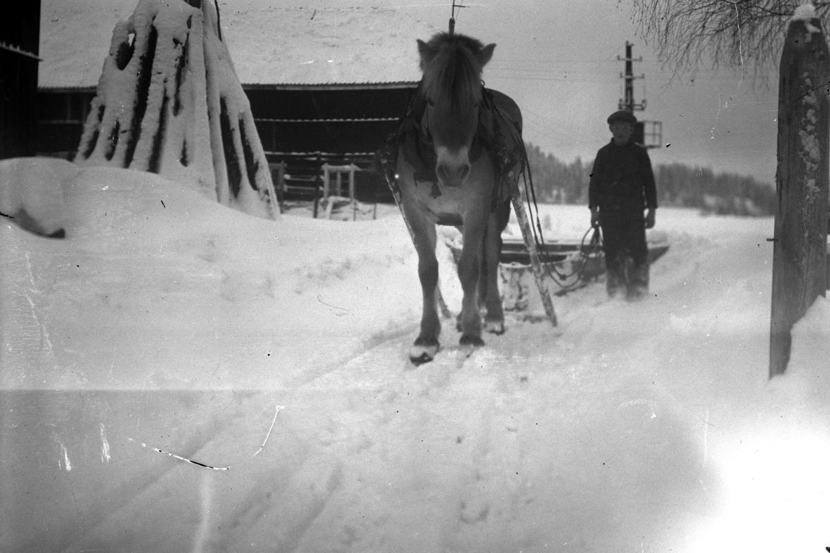 Gutt med hest og slede. Fjording.