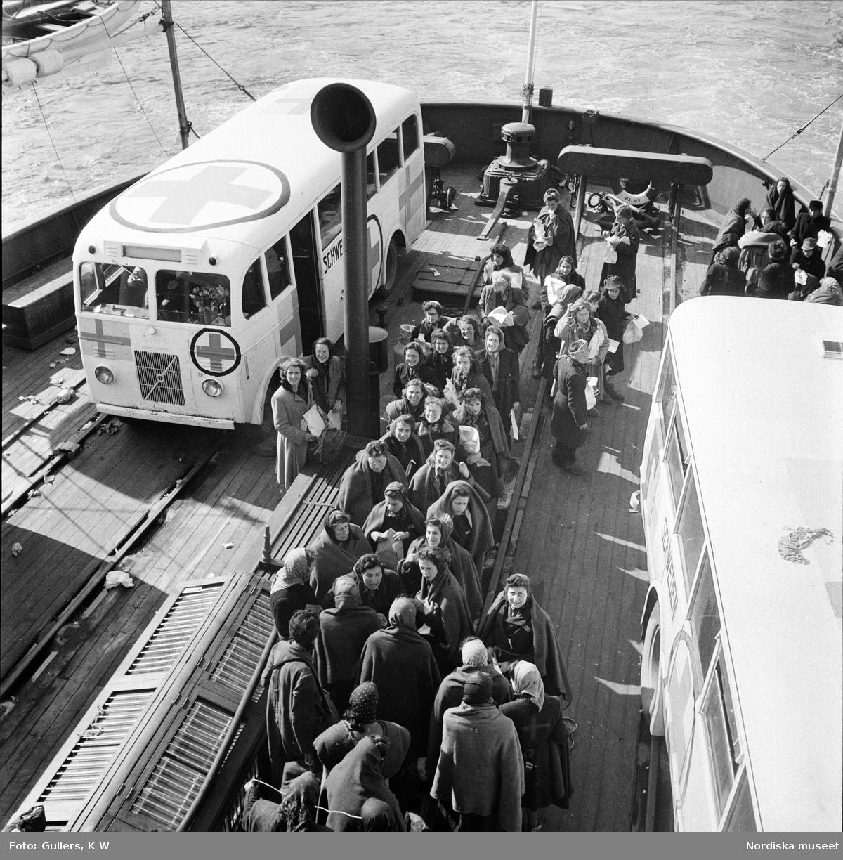 Flyktingar. Folke Bernadottes expedition med de Vita bussarna. Ombord på färjan till Sverige. De vita bussarna med det röda korset på taket.