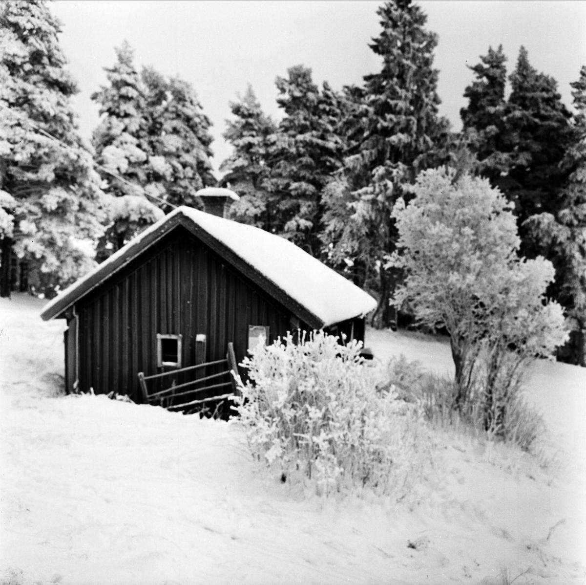Torslunda i vinterskrud, Tierps socken, Uppland 1967