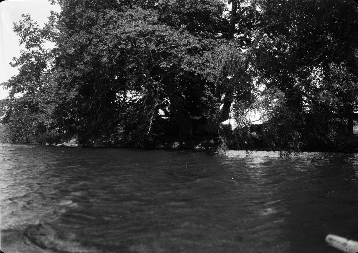 Långsjön vid Sätuna gård, Björklinge socken, Uppland 1930