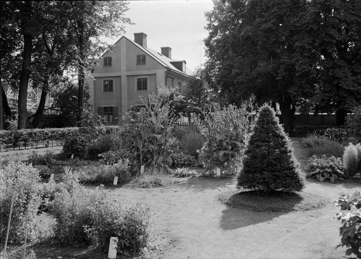 Linnéträdgården, Uppsala 1939