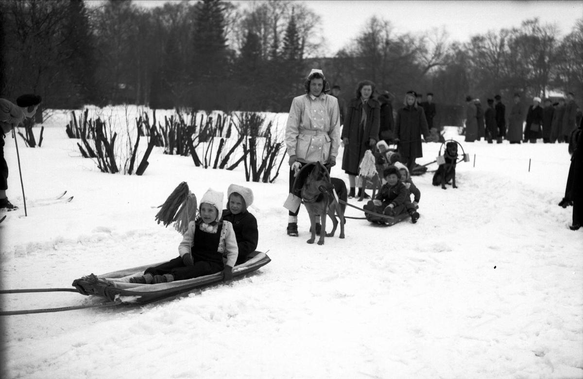 Svenska Brukshundklubbens Uppsalaavdelning har uppvisning, Uppsala mars 1946